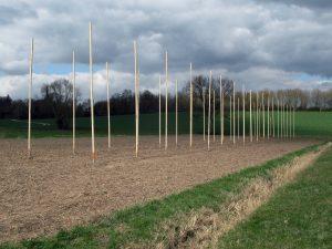 Für den Hopfenschaugarten wurden 40 Stangen gestellt an welchen der künftige Hopfen wächst.