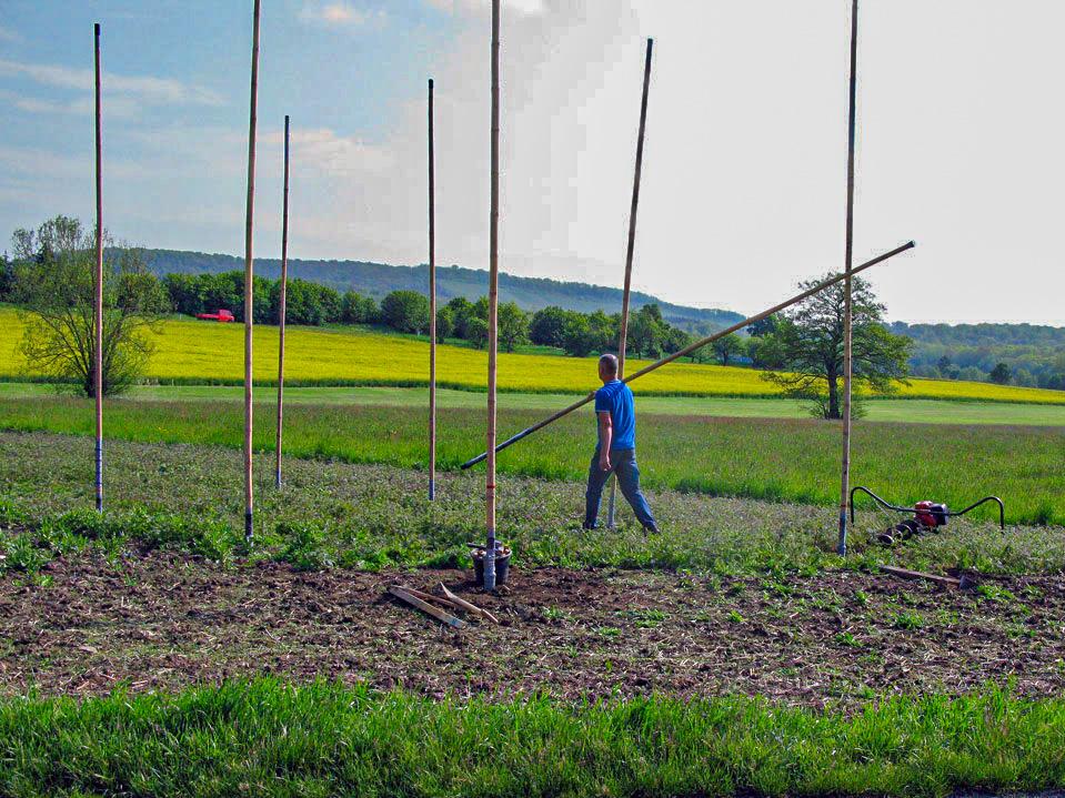 Einbau der neuen Bambusstangen im Schaugarten