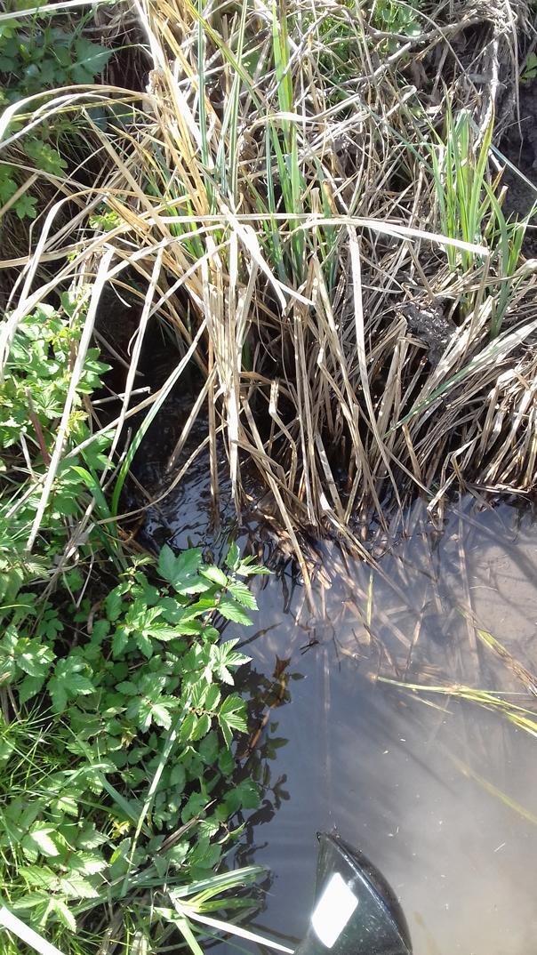 Giessen im Hopfengarten mit Wasser aus dem Graben